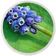 Grape Hyacinth Spike  Round Beach Towel