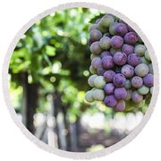 Grapes On Vine 2 Round Beach Towel