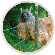 Grass Is Always Greener - Llama Round Beach Towel by Jordan Blackstone