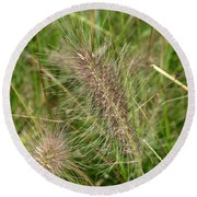 Grasses At Spaulding Pond Round Beach Towel