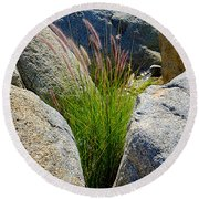 Grasses In Oasis On Borrego Palm Canyon Trail In Anza-borrego Desert Sp-ca Round Beach Towel