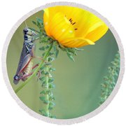 Grasshopper Be Still Round Beach Towel
