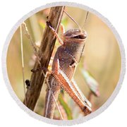 Grasshopper In The Marsh Round Beach Towel