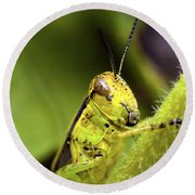 Grasshopper Macro 9402 Round Beach Towel