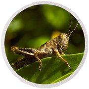 Grasshopper Macro Round Beach Towel
