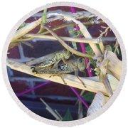 Grasshopper Piggyback Round Beach Towel