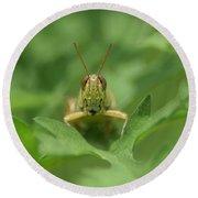 Grasshopper Portrait Round Beach Towel