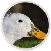 Grassy-bill Duck Round Beach Towel