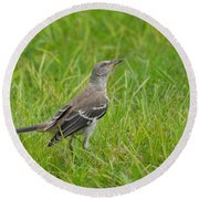 Gray-eyed Catbird II Round Beach Towel