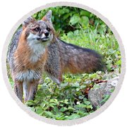 Gray Fox Round Beach Towel