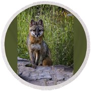 Gray Fox Posing Round Beach Towel