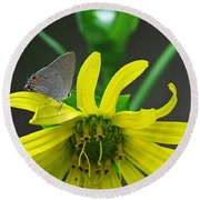 Gray Hairstreak Butterfly Round Beach Towel