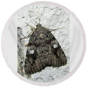 Gray Owlet Moth Round Beach Towel