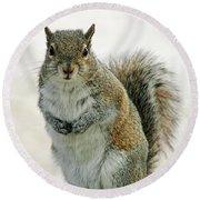 Gray Squirrel Round Beach Towel