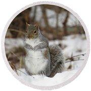 Gray Squirrel In Snow Round Beach Towel