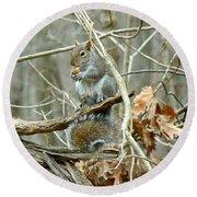 Gray Squirrel - Sciurus Carolinensis Round Beach Towel