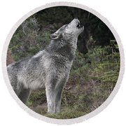 Gray Wolf Howling Endangered Species Wildlife Rescue Round Beach Towel