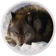 Gray Wolf In Snow Round Beach Towel