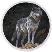 Gray Wolf On Hillside Endangered Species Wildlife Rescue Round Beach Towel