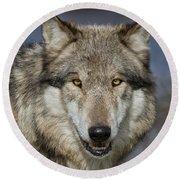 Gray Wolf Portrait Round Beach Towel