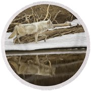Gray Wolf Reflection Round Beach Towel