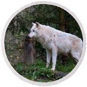 Gray Wolf White Morph Round Beach Towel
