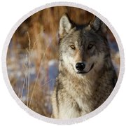 Gray Yearling Round Beach Towel