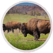 Grazing Bison Round Beach Towel