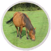 Grazing Chestnut Pony Round Beach Towel