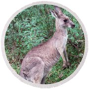 Grazing In The Grass Round Beach Towel