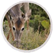 Grazing Oklahoma Round Beach Towel