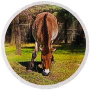 Grazing With An Attitude Round Beach Towel