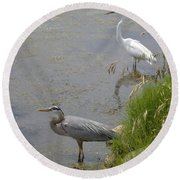 Great Blue And White Egrets Round Beach Towel