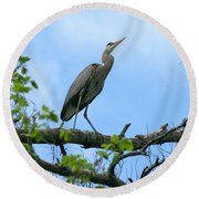 Great Blue Heron Afternoon Fishing  Round Beach Towel
