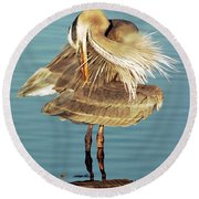 Great Blue Heron Ardea Herodias Preening Round Beach Towel