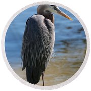Great Blue Heron By Pond Round Beach Towel
