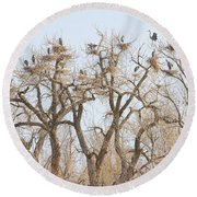 Great Blue Heron Colony Round Beach Towel