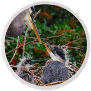 Great Blue Heron Family Round Beach Towel