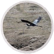 Great Blue Heron Flight Round Beach Towel