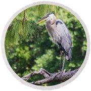 Great Blue Heron I Round Beach Towel