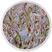Great Blue Heron In Fall Marsh Round Beach Towel
