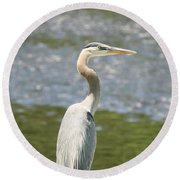 Great Blue Heron In Light  Round Beach Towel