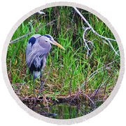 Great Blue Heron In Nature Round Beach Towel