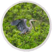 Great Blue Heron Landing Round Beach Towel
