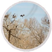 Great Blue Heron Nest Building 1 Round Beach Towel