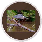 Great Blue Heron Oak Creek Canyon Sedona Arizona Round Beach Towel