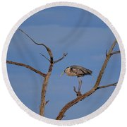 Great Blue Heron Perched On Branch Round Beach Towel