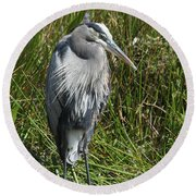 Great Blue Waiting For Prey Round Beach Towel