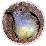 Great Crested Flycatcher In Nest Cavity Round Beach Towel