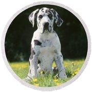 Great Dane Puppy Round Beach Towel